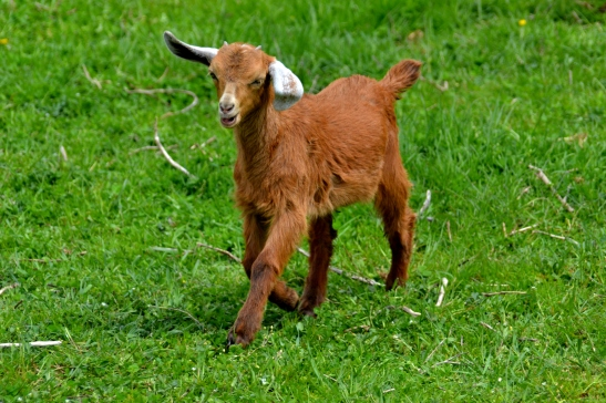 New Kid on the Block Crescent Farm