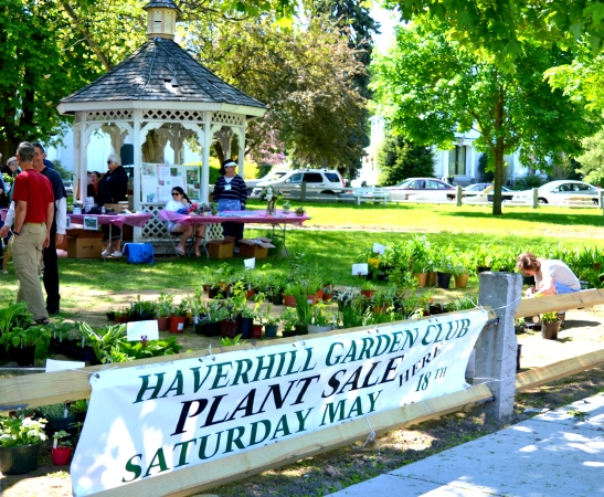 Haverhill Garden Club Plant Sale Winds Down