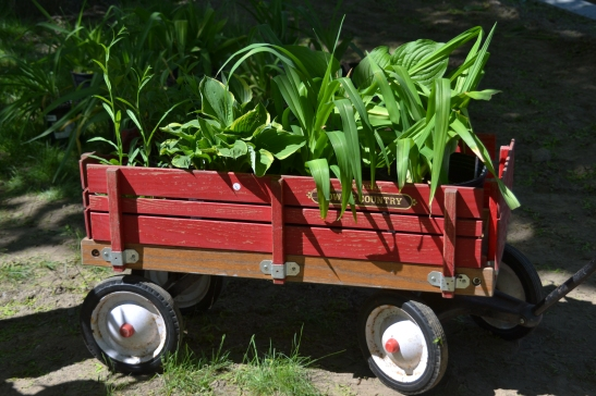 An expert shopper loads a wagon full of great plant deals at Haverhill Garden Club