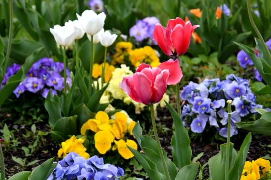 DSC_0897 Haverhill Blog HHS Flowers