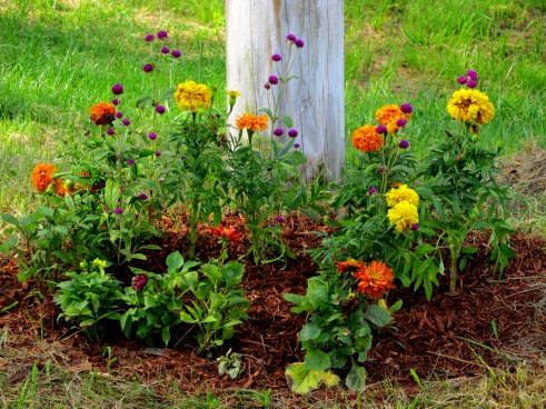 Flowers donated by a neighbor for Merrimack River Park, Haverhill