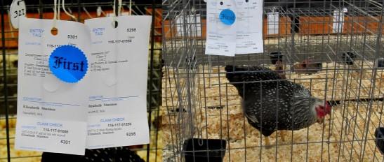 Winning Poultry