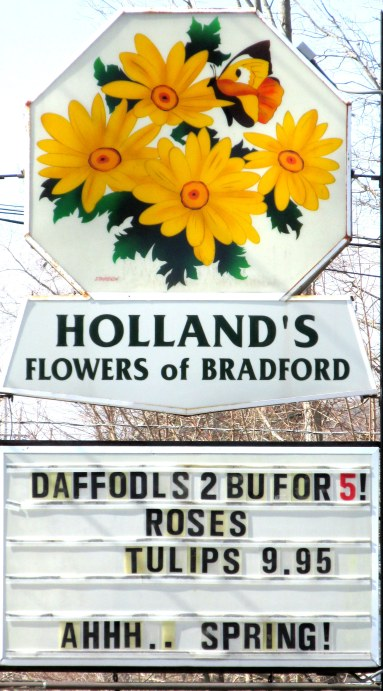 IMG_3694 Haverhill Holland Flowers blog