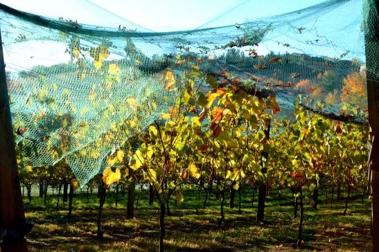 DSC_0325-001 Haverhill Willow spring vineyard