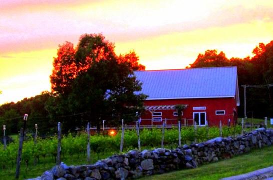 IMG_1190 Haverhill Willow Springs vineyards dusk