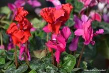dsc_5392-haverhill-ghaa-nunans-parrot-plants-and-painters