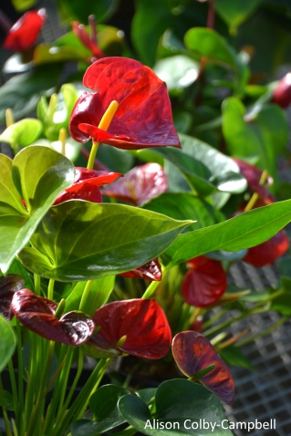 dsc_5395-haverhill-ghaa-nunans-parrot-plants-and-painters