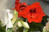 dsc_5400-haverhill-ghaa-nunans-parrot-plants-and-painters