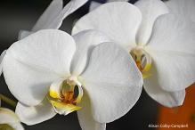 dsc_5404-haverhill-ghaa-nunans-parrot-plants-and-painters