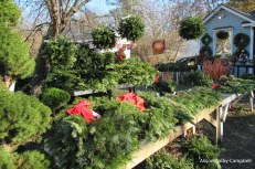 IMG_2233IMG_2231 Haverhill Cottage Gardens Christmas trees