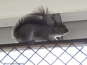squirrel chatted at me thinking I might take its favorite tree