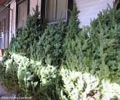 IMG_2375 Haverhill Christmas Trees Elks