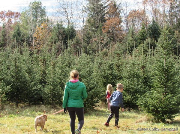 Newman Christmas Trees.Finding The Tree In Haverhill The Heartbeat Of Haverhill