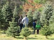 IMG_2451 Haverhill Christmas trees Hansen farm