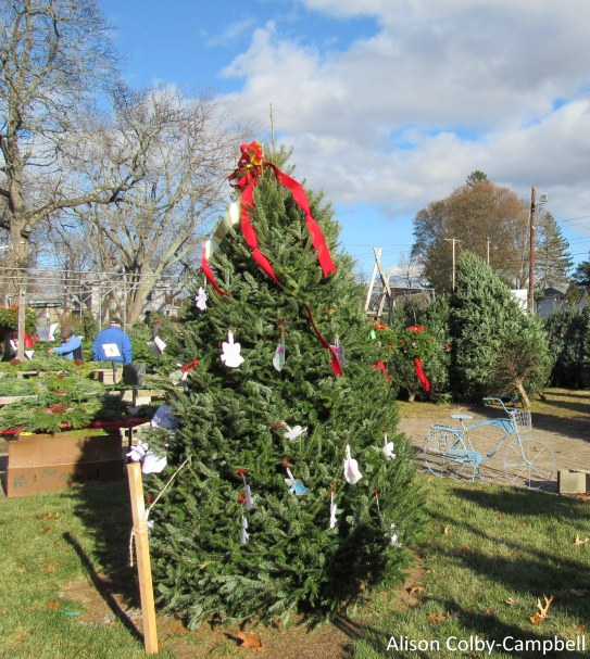 IMG_2467 Haverhill Christmas Trees Rogers Spring Hill