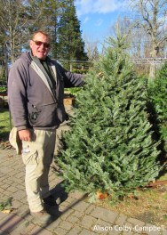 IMG_2474 Haverhill Christmas Trees Rogers Spring Hill Cook Fir
