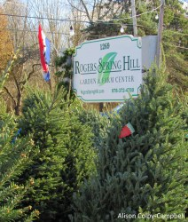 IMG_2481 Haverhill Christmas Trees Rogers Spring Hill