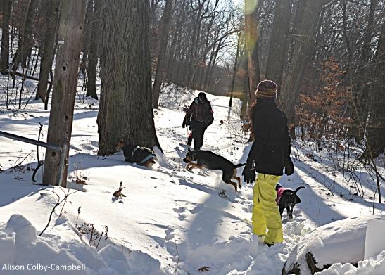 DSC_3394 Haverhill Snow 2018 Dog Face Winnekenni