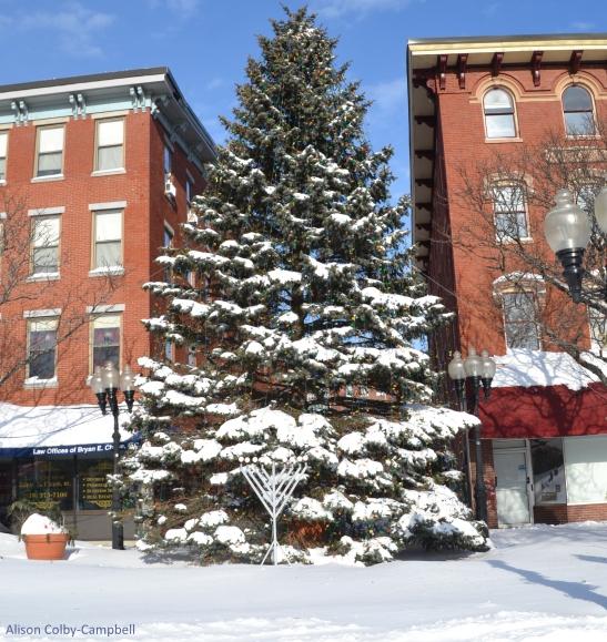 DSC_3456 Haverhill Snow 2018 Washington Sq Christmas Tree