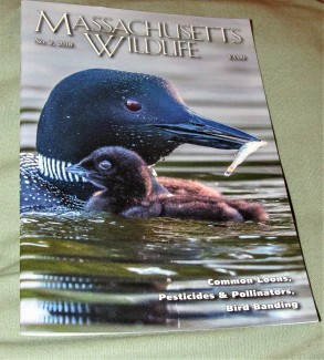 IMG_1468 (2) MASSACHUSETTS WILDLIFE MAG phots by Alison Colby-Campbell Dads fishing trip article