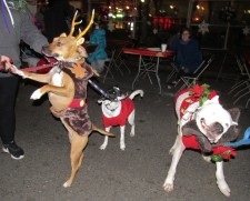IMG_7379 (2) HAV (c)Alison Colby-Campbell GHCC 2018 CHristmas Stroll Holly Athena Zeus DOgs
