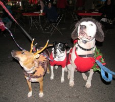 IMG_7380 (2) HAV (c)Alison Colby-Campbell GHCC 2018 CHristmas Stroll Dogs Holly Athena Zeus